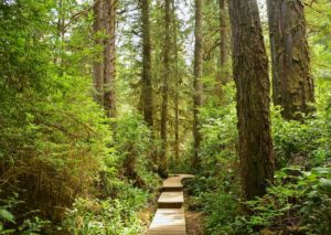 A 480-mile trekking route is now open on Vancouver Island
